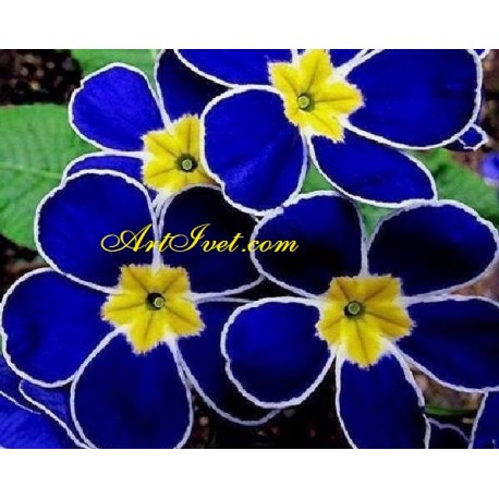 Рисуване по Номера (пълен комплект) - Синя красота
