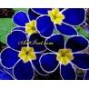 Рисуване по Номера (пълен комплект) - Синьо и жълто - красотата на контрастите