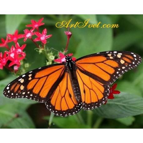 Рисуване по Номера (пълен комплект) - Оранжевата пеперуда