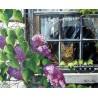 Рисуване по Номера (пълен комплект) - Котето на прозореца